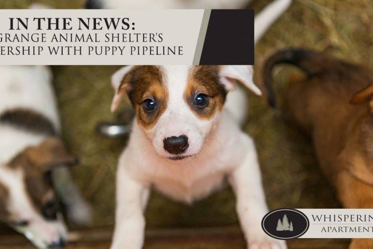 In the News: LaGrange Animal Shelter's Partnership with Puppy Pipeline