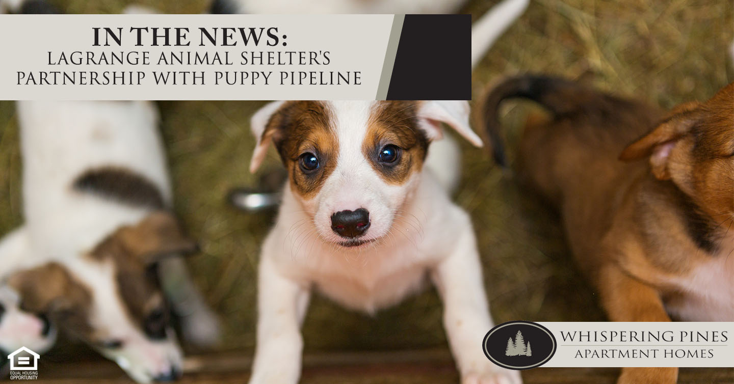 LaGrange Animal Shelter's Partnership with Puppy Pipeline
