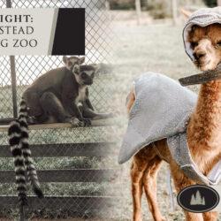 Iron P. Homestead Exotic Petting Zoo