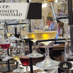 Nutwood Winery's Music in the Vineyard