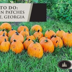 Pumpkin Patches in LaGrange