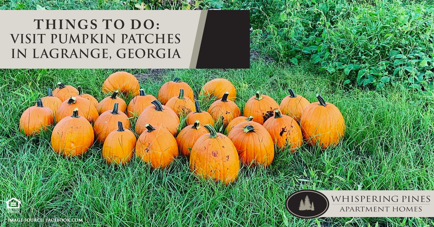 Things to Do: Visit Pumpkin Patches in LaGrange, Georgia